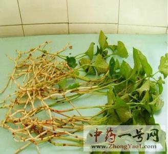 鱼腥草的功效与作用-中药鱼腥草的禁忌及食用方法