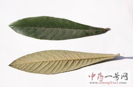 枇杷叶的功效与作用-枇杷叶的禁忌及食用方法-中药