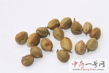 中药巴豆的作用_巴豆的功效与作用及禁忌-中药一号网